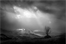 Tree, Rannoch Moor