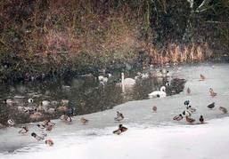 Winter, Cudmore Grove