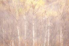 Glen Affric, Autumn