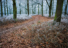 Wintry Wood, Epping