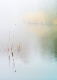 Wake Valley Pond in the Mist