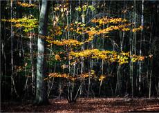 Autumn Abstract II