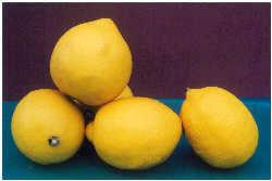 Citrus Lemon Meyer 3L