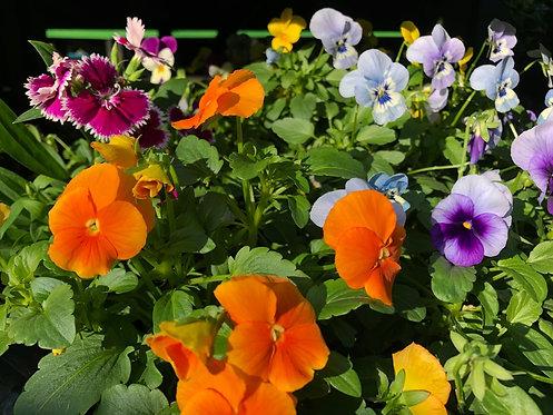 Flowering Punnets