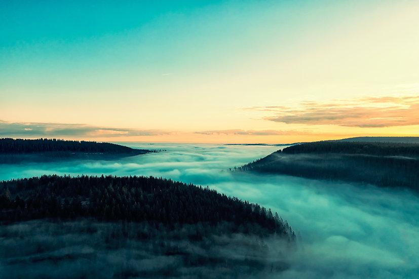 the fog I