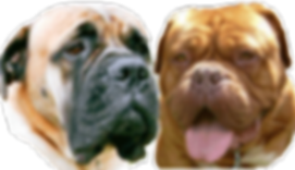 logo of Bullmastif and dogue de bordeaux