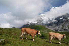 Jungfraujoch,Switzerland