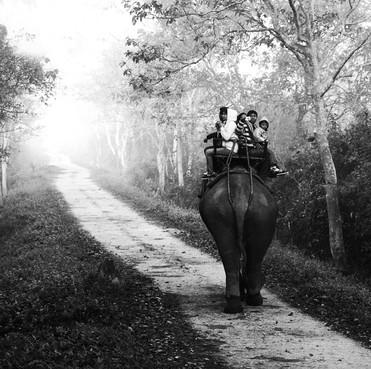 Kaziranga,India