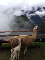 MachuPicchu,Peru