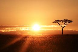 MaasaiMara,Kenya