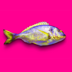 I2. FISH TALES_Insta v2