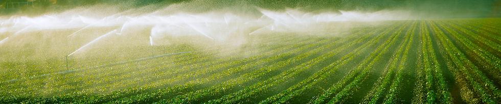 Irrigation_Strip.jpg