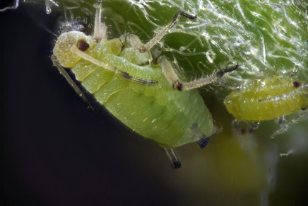 EM Insects 03.jpg