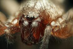 EM Spiders 9.jpg