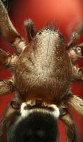 EM Spiders 10.jpg