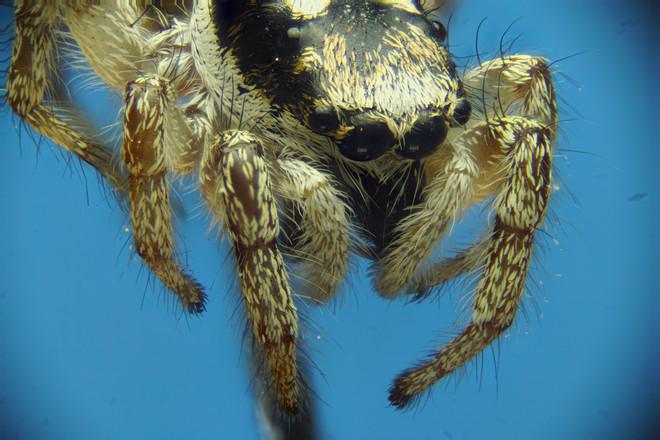 EM Spiders 4.jpg
