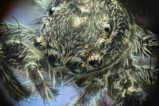 EM Spiders 6.jpg