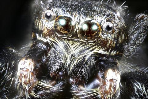 EM Spiders 3.jpg