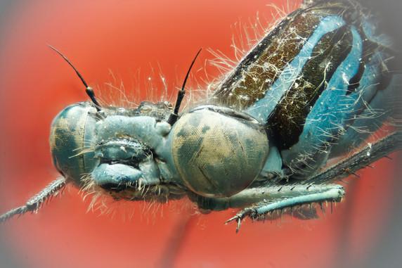 EM Insects 11.jpeg