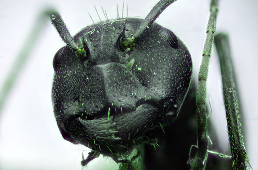 EM Insects 27.jpg