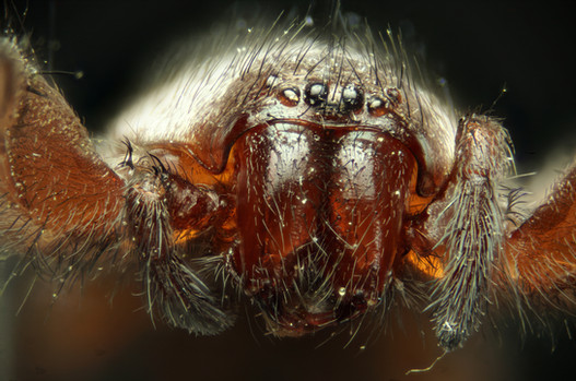 EM Spiders 8.jpg
