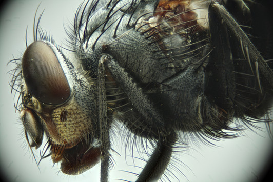 EM Insects 05.jpg