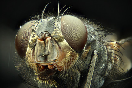 EM Insects 06.jpg