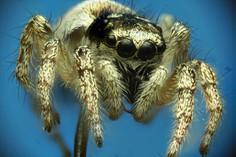 EM Spiders 1.jpg