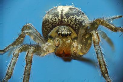EM Spiders 5.jpg
