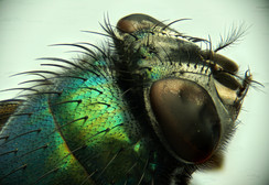 EM Insects 25.jpg