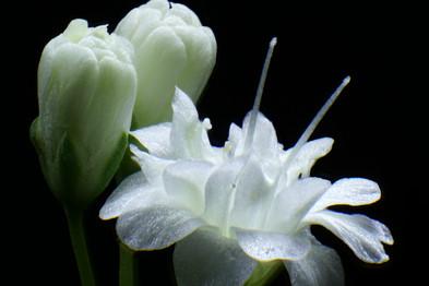 EM Flora 1.jpg