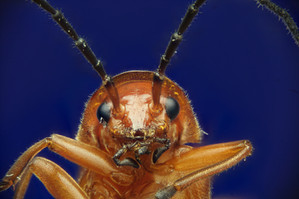 EM Insects 23.jpg