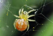 EM Spiders 12.jpg