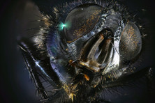 EM Insects 14.jpg