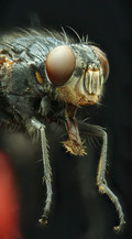 EM Insects 29.jpg