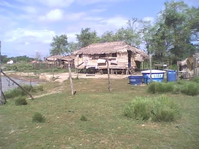 Cada de jirau, habitação comum na Baixada. Povoado Tabocal, Arari. Imagem Divulgação.