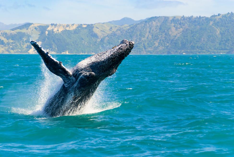 California Whale Festivals