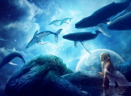 3月,兒童與鯨魚大規模出離的靈性提醒