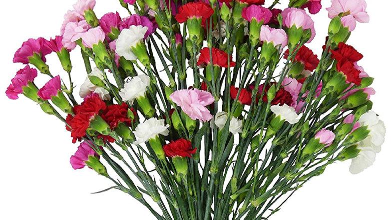 Fresh Mini Carnations Multi-Color Spray Bouquet