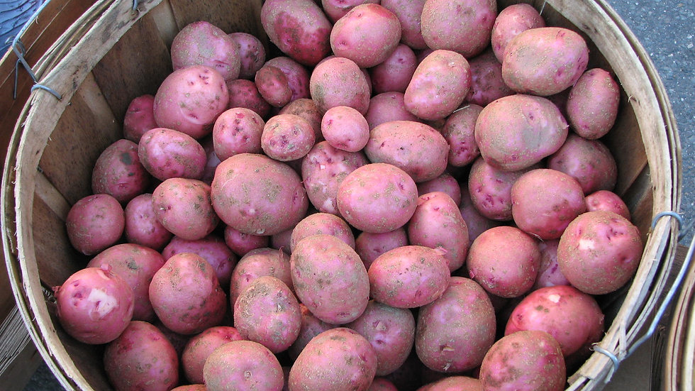 Red Skinned Potatoes