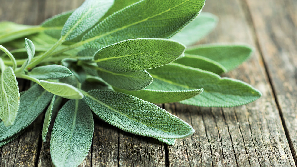 Fresh Sage Bundle