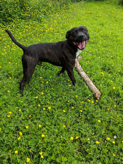 Max loves his stick
