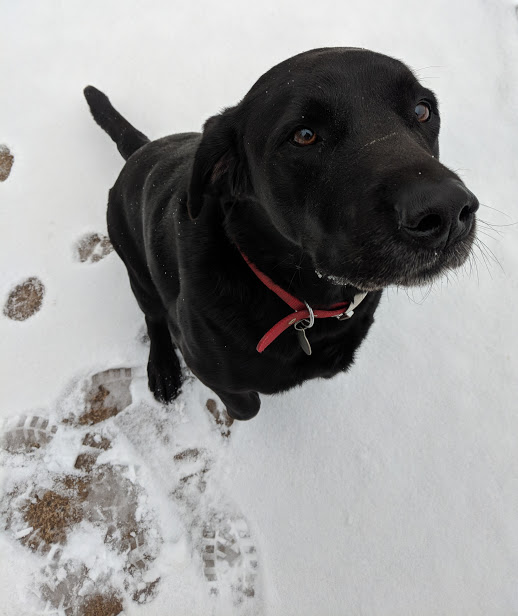 Alfie loved the snow day!
