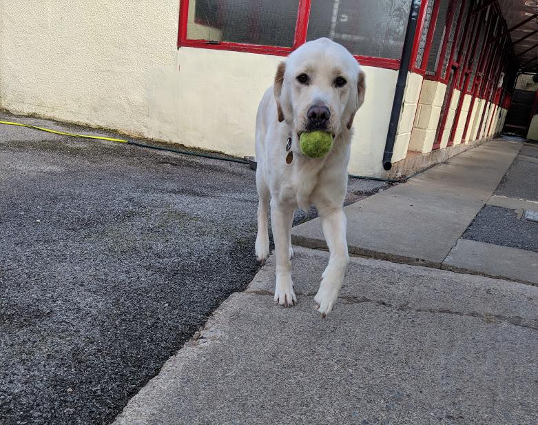 Junior loves fetch