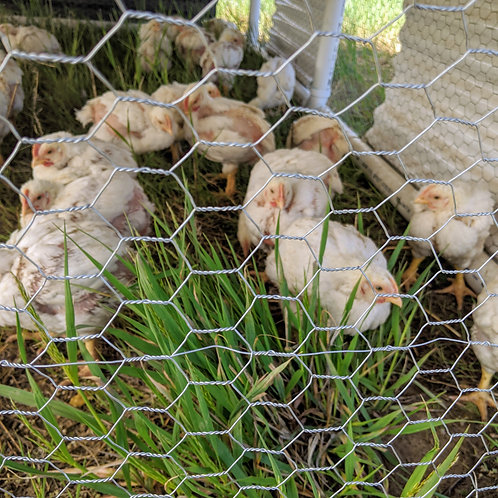 Pastured Chicken-June 2021 pick up