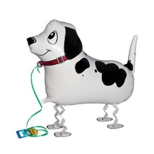 Dalmatian Dog Walking Pet