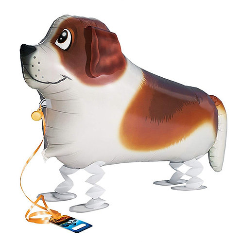 St Bernard Dog Walking Pet
