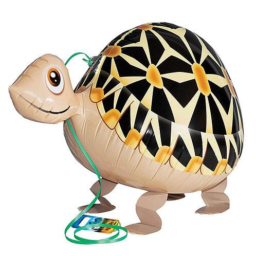 Tortoise Walking Pet
