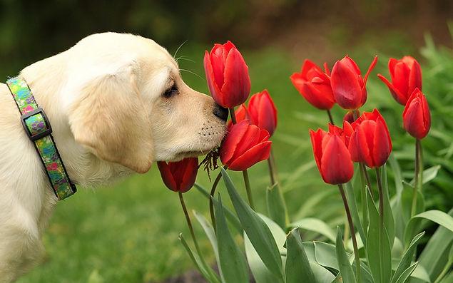 Yellow pup flowers.jpg