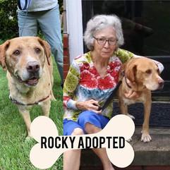 RockyAdopt.jpg